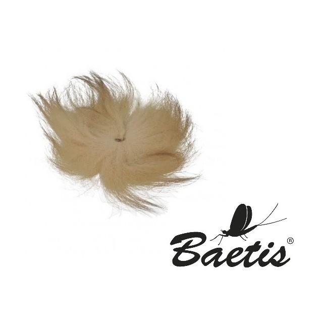 Baetis - Volpe Artica